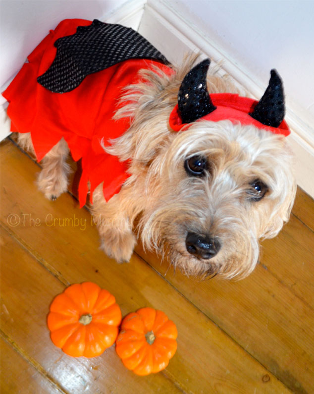 Devil-Costume-For-Dogs