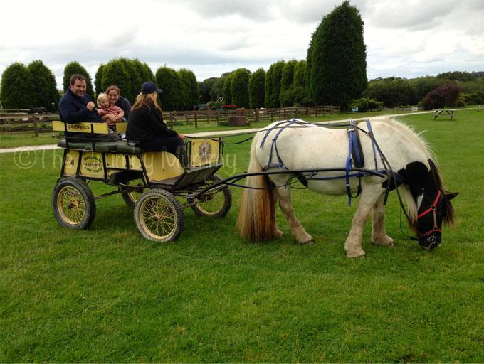 Horse-&-Cart