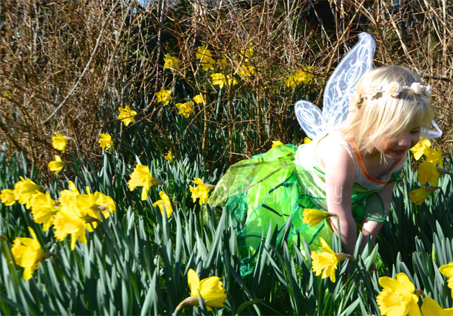 Picking-Daffodils