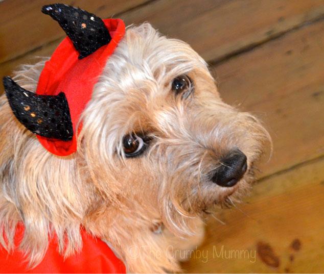 Dog's-Halloween-Costume
