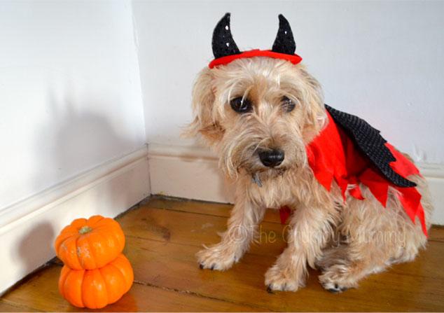Pet's-Halloween-Costume