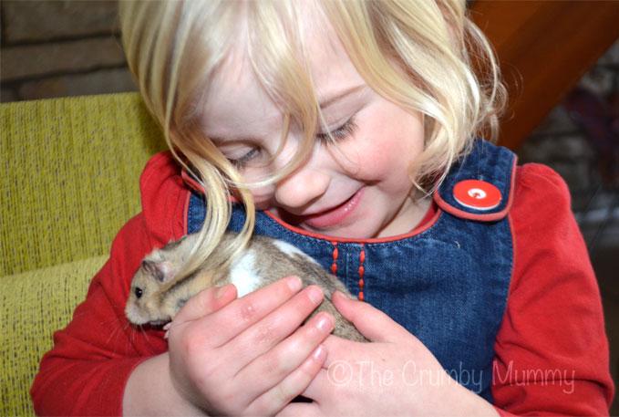 Hamster-Cuddles