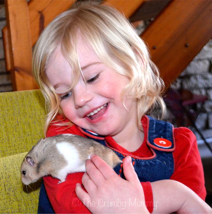 Hamsters-As-Pets