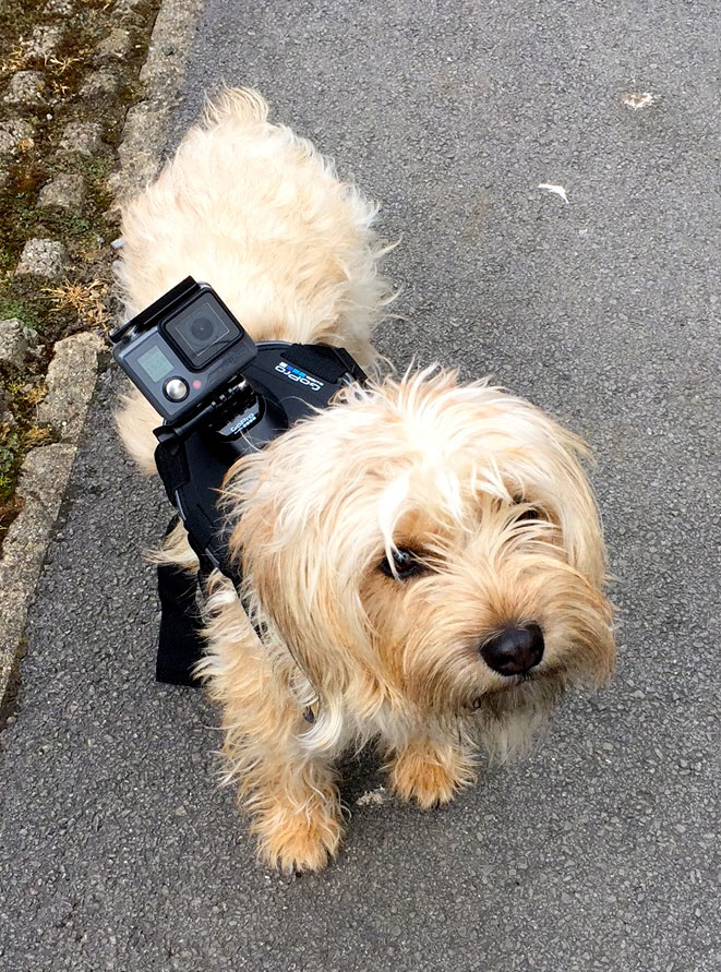 Go-Pro-Hero-&-Dog-Harness
