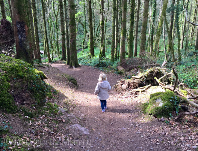 Woodland-Fun-With-Toddlers