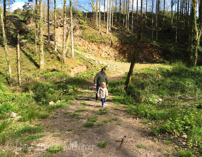 Woodland-Walks