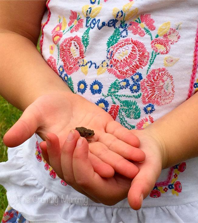 Tiny-Toad