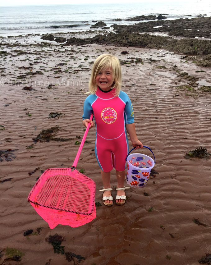 rock pooling in devon