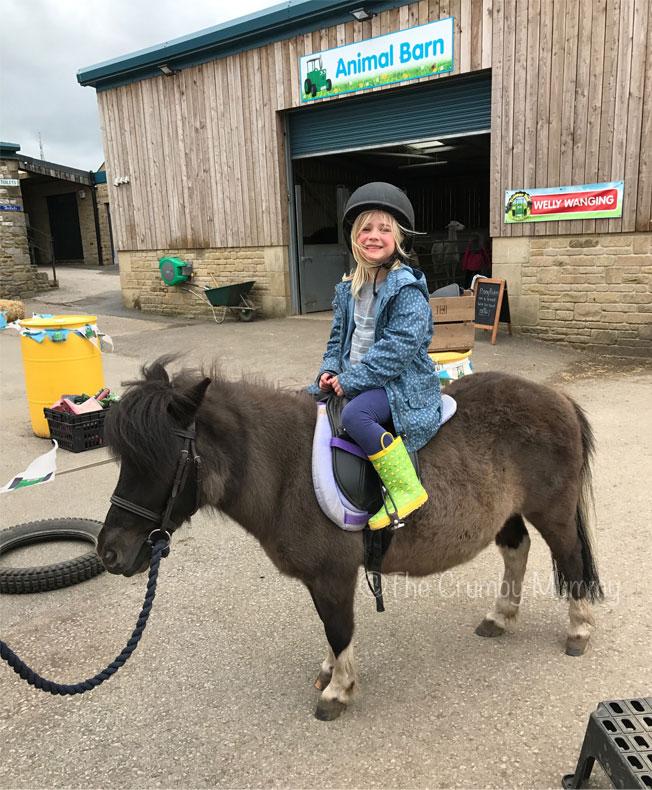 pony rides for children